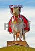 IMG_0527 Crop of head on Santa Cow