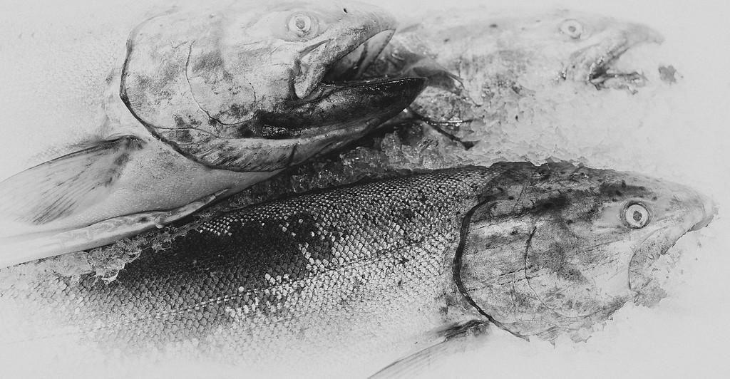 Coho Salmon, Pike Place