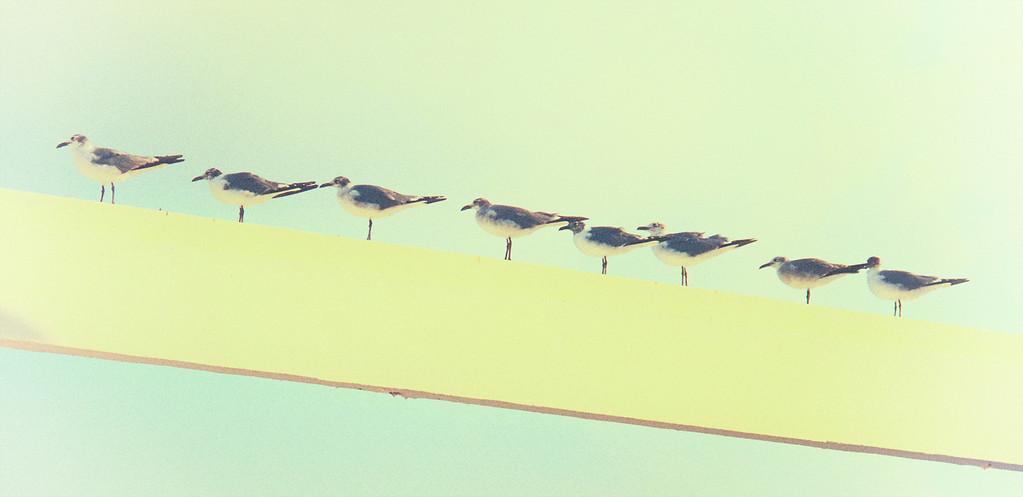 Gulls On Wall