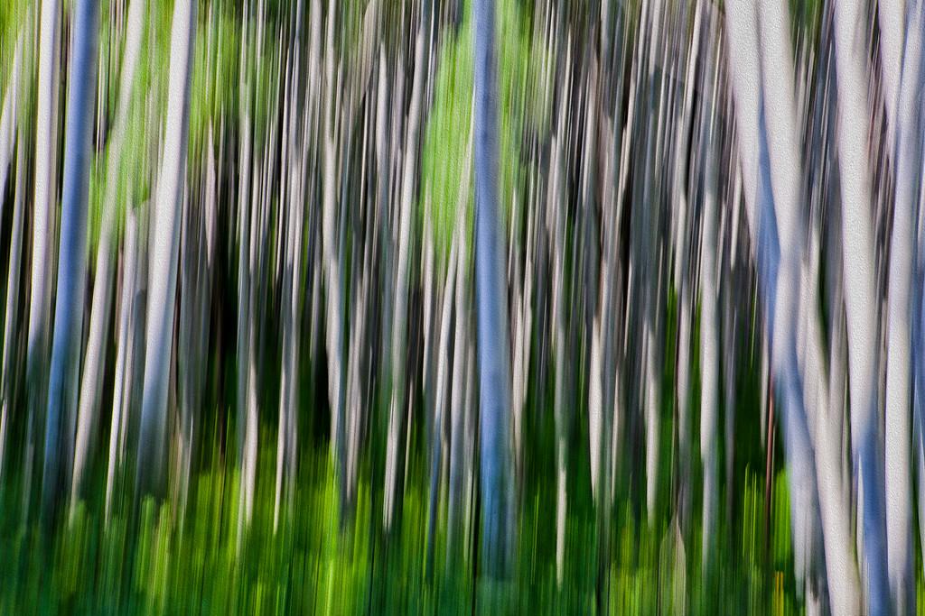 Aspen Abstract