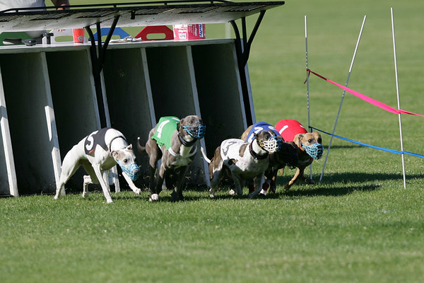 NOTRA Whippet Derby