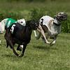 WRA Rosewood Racing 051317-7434