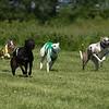 WRA Rosewood Racing 051317-7430