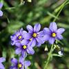 Wildflowers, spring 2010