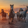 Running through the sunset