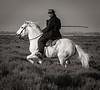 Camargue Horse and Gardian