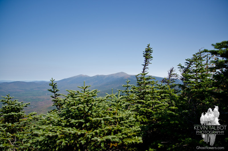 Northern Presidentials from viewpoint on Mount Field.