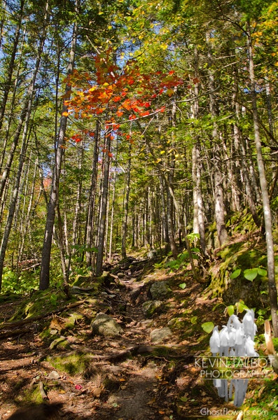 Avalon Trail.
