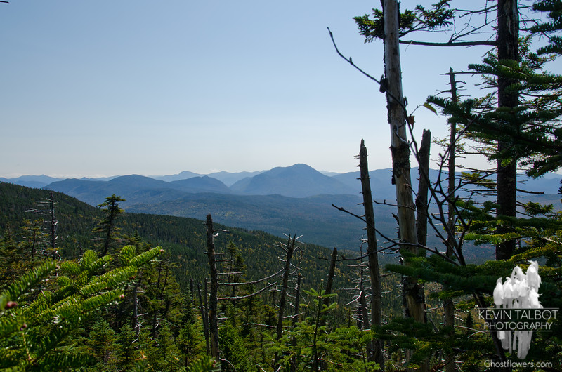 View southwest to Carrigain Notch from Willey Range Trail.