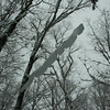Snow cornice on a branch overhead.