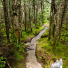 Trail between summits.