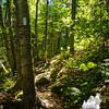 Beautiful woods.