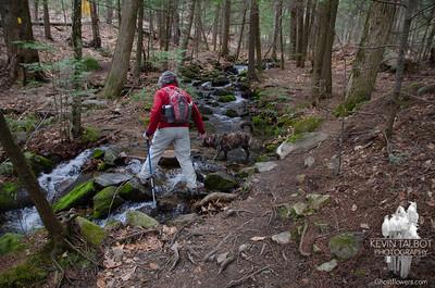 Aptly named Brook Trail...