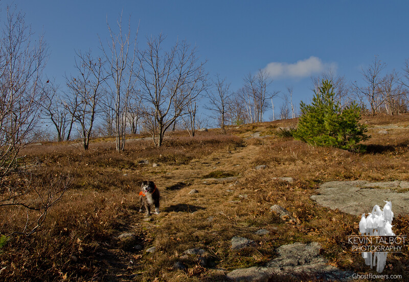 Emma leads towards Straightback Mountain.