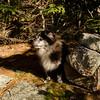 Emma at the Mount Klem cairn.