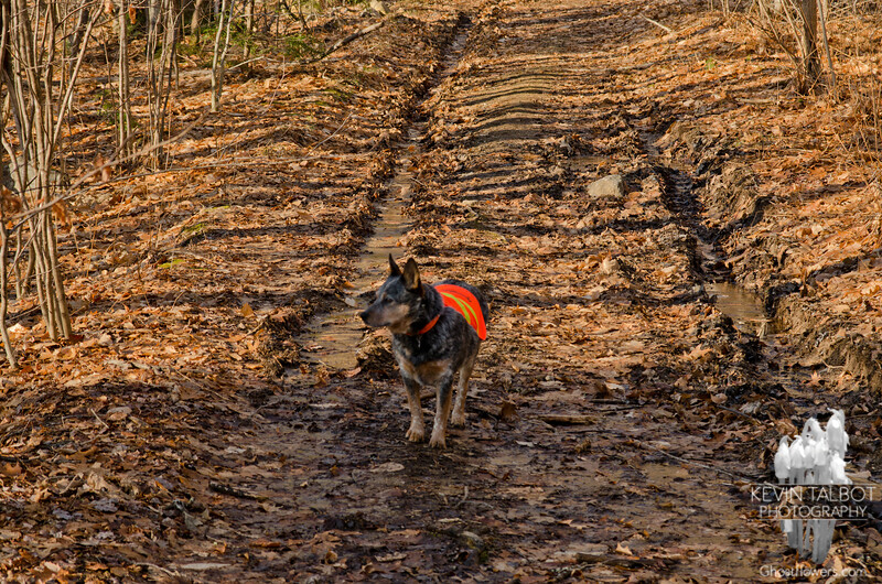 On the trail with Mr. Blue.