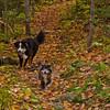 Trail buds.