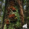 Possibly: Many-colored Polypore Coriolus versicolor, and Lichen.