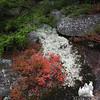 Low bush Blueberry and Reindeer Lichen.