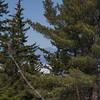 Mount Passaconaway framed in the pines...