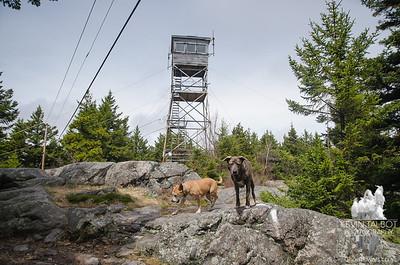 Belknap Mountain Fire Tower
