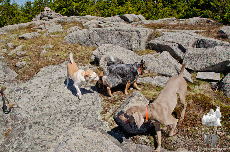 Lots of dogs on Piper Mountain.