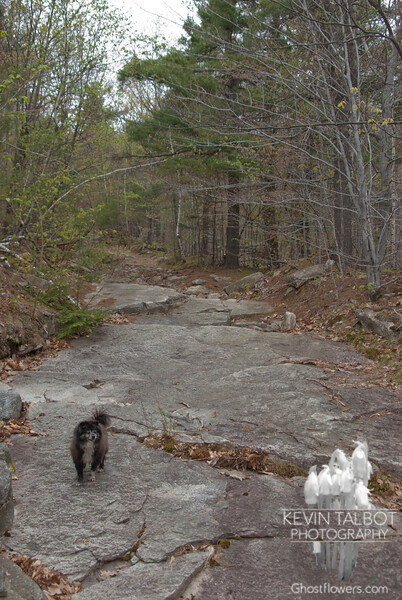 After stumbling along through the stones on the old tractor road, it was nice to come to some smooth ledge.