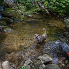 The water is still cool and refreshing near the trailhead.