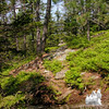 White Cairn Trail on Blueberry Mountain in Evans Notch.