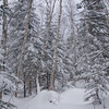 New snow coats the forest above Zealand Hut.