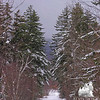 Bunnell Notch Trail.