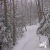Beautiful along the trail.