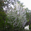 Breeze on a fog-soaked cobweb.