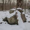 Rocks & Roots