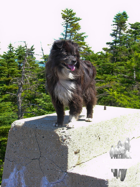 As always, Emma enjoys the mountain top.