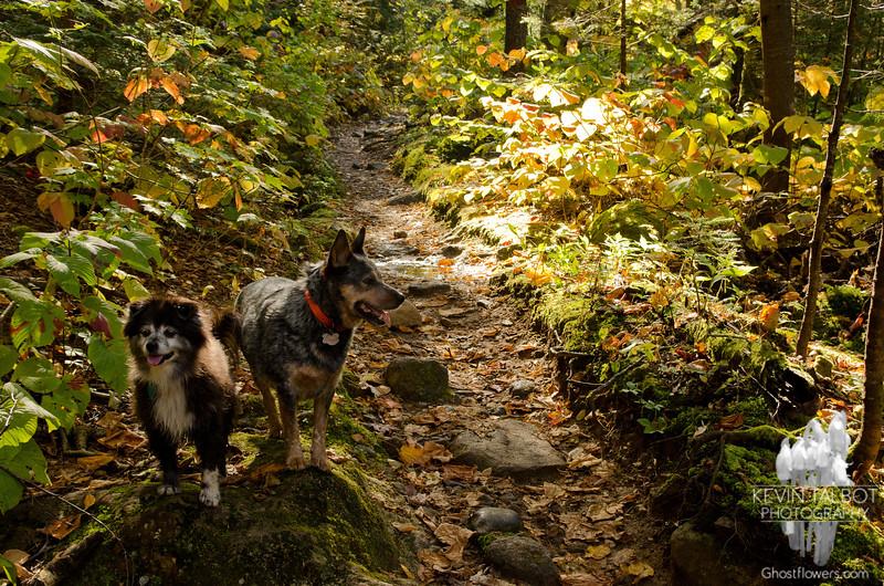 Trail Buddies 1.
