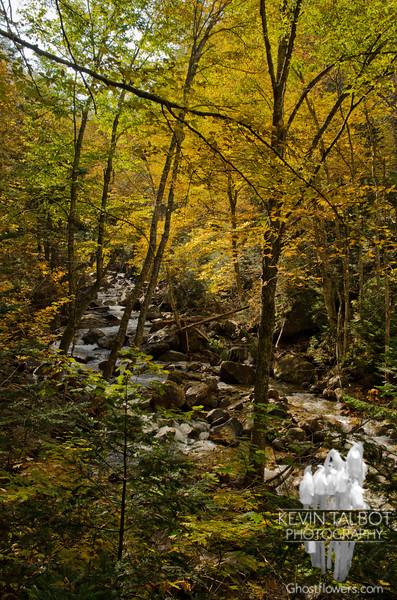 Yellows along the brook.