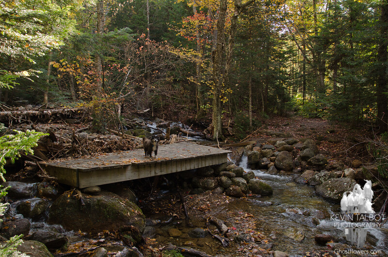 Irene relocated this bridge.