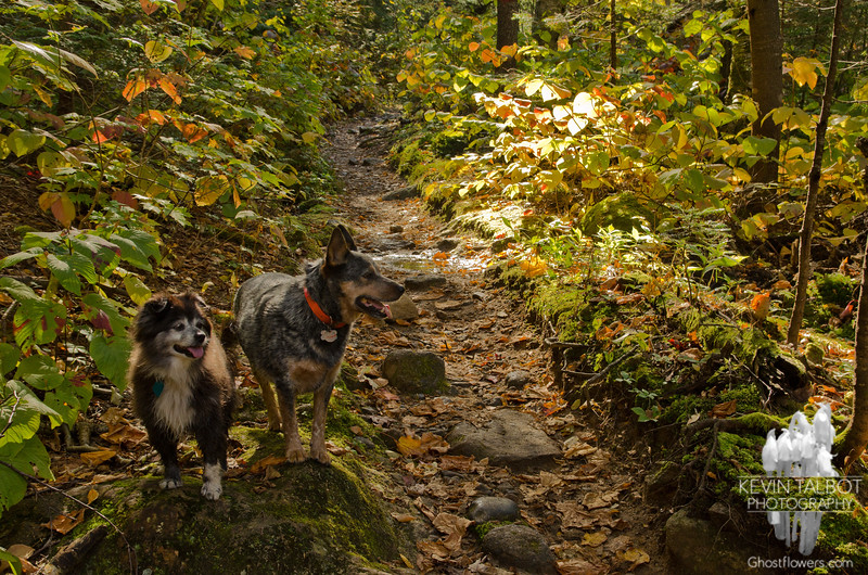 Trail Buddies 2.