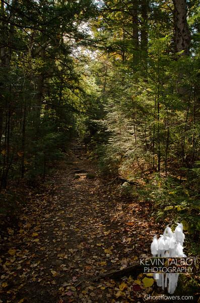 Along 19 Mile Brook Trail.