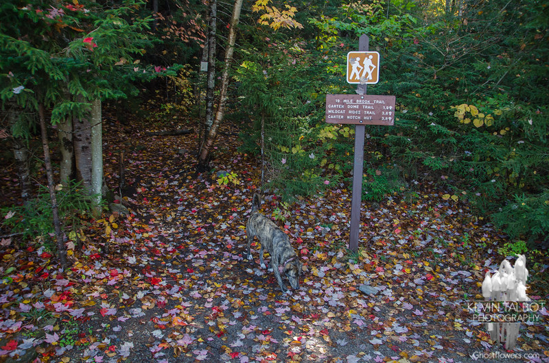 Colorful carpeting as we start out along the 19 Mile Brook Trail...