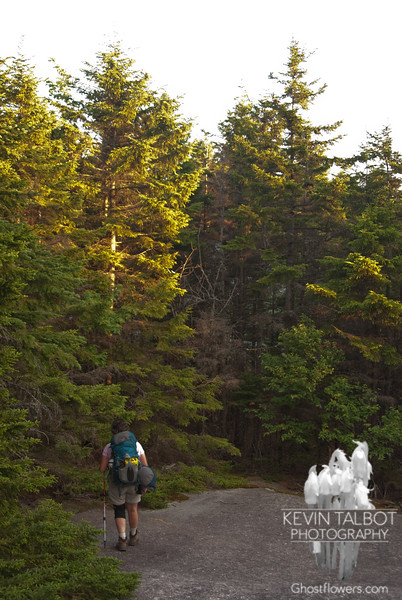 Late afternoon light as we ascend Dickey Mountain.