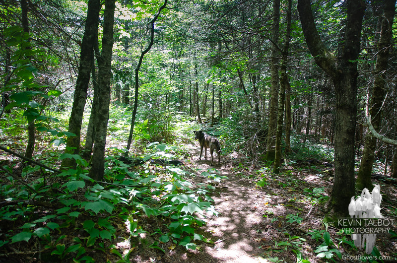 Mixed forest again in the col between North & South D...