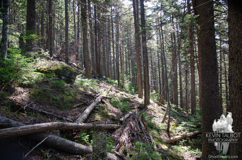 Steep terrain as we descend the Old Path...