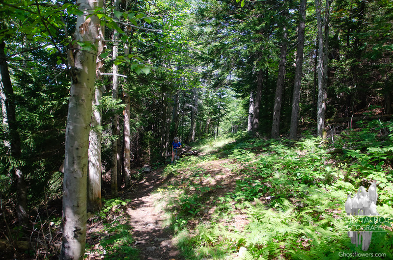 """Quickly gives way to mixed and eventually to a mainly coniferous forest when we reach the summit...<br /> <br /> You learn quickly when hiking in the Whites that the word """"short"""" is synonymous with """"steep""""..."""