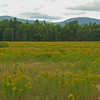 Field of Goldenrod south of Evan's (er, uh, Kevin's) Notch.