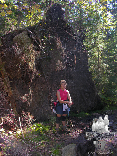 Root system of a huge windfall White Pine on the Royce Trail between summits.