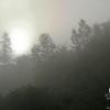 Foggy start on the East Royce Trail.
