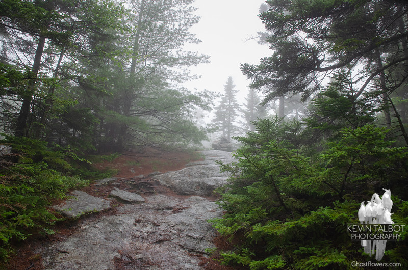 Soon the trail becomes ledges. They were wet and slippery, and a bit treacherous as you shall see, as we ascended through the rain & fog sopped evergreens...