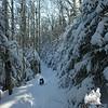 Gale River Trail.